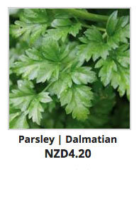 Recommended_Seeds_Parsley_Dalmatian